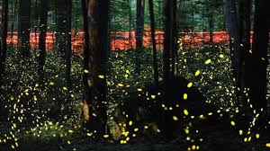 Fantastical Fireflies—His Perspective