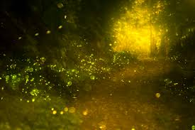 Thousands of Fireflies Make the Woods Magical
